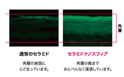 敏感肌・乾燥肌専門エイジングケア「アヤナストライアルセット」ディセンシア