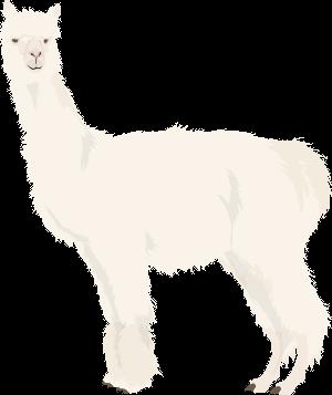 素材 動物 アルパカ