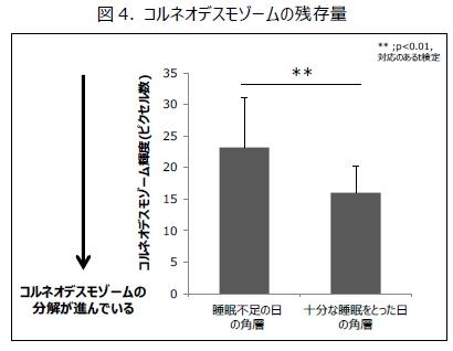 睡眠の量と角層コルネオデスモゾームの分解の関係